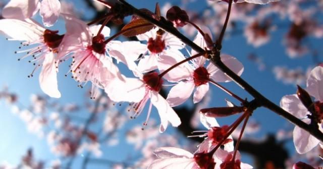 Синоптиците дадоха дългосрочна прогноза за времето през март